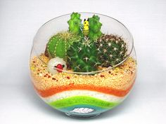 Color Sand planting cactus