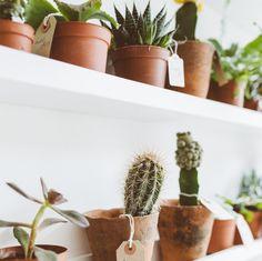 Botany UK plant shop Gardenista Market vendor GROW London 2015 ; Gardenista