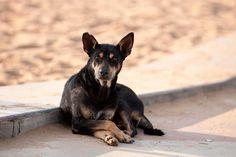 Spara al cane : dipendente del Consorzio di Ferrara viene licenziato | FbSocialPet