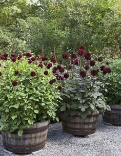 Thrilling About Container Gardening Ideas. Amazing All About Container Gardening Ideas. Container Plants, Container Gardening, Gardening Tips, Garden Cottage, Garden Pots, Back Gardens, Outdoor Gardens, Plantar, Flower Planters