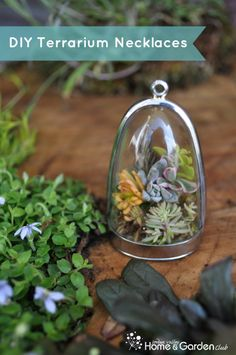 DIY Terrarium Necklaces - How to Make Terrariums You Can Wear Plus A List of Suppliers!