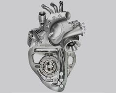 heart anatomy drawing - Google Search