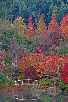 Sequoia Gardens (Magoebaskloof, Limpopo) i