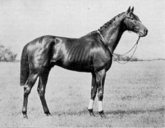 Solario(1922)(Colt)Gainsborough- Sun Worship By Sundridge. 4x4 To Hampton, 4x5x5 To Galopin, 5x5 To Hermit & Lord Clifden. Won St Leger(Eng), Ascot Gold Cup(Eng), Coronation Cup(Eng). Sire Of 2 Epsom Derby Winners(Mid-Day Sun & Straight Deal).