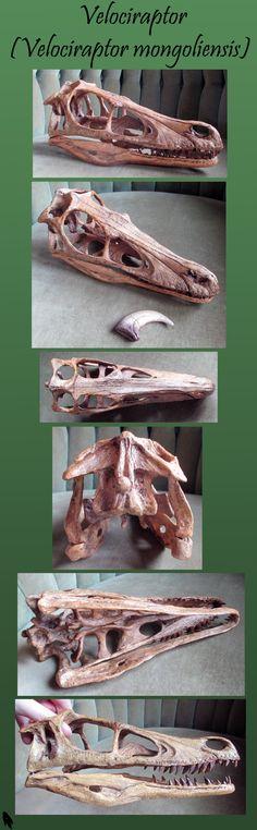 Velociraptor Skull by Skybird99.deviantart.com on @deviantART