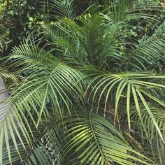 #green #plants #trees #aesthetic #pinterest #perthblogger