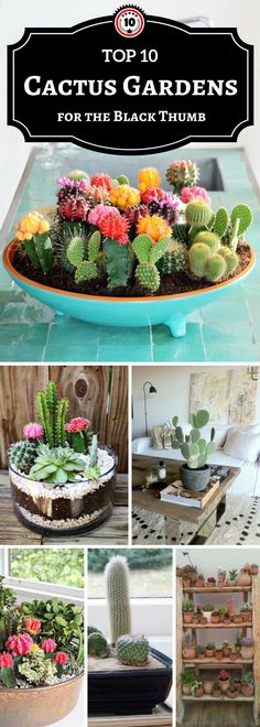 cactus gardens #home #gardening