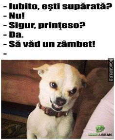 32 Meme Perro Chihuahua Triste Perro Chihuahua Me Chihuahua Meme, Trollface Quest, Troll Face, Healthy Pets, Meme Faces, Animals And Pets, We Heart It, Laughter, Haha