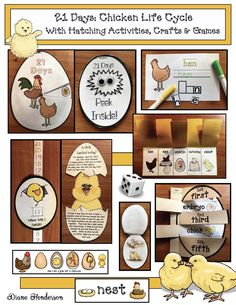 "Farm Animal Activities: Wonderful ""Life Cycle of a Chicken"" packet filled with games, puzzles, word work, photographs, crafts, worksheets, & experiments!"