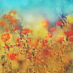 wisdom of bloom by =AlicjaRodzik on deviantART by Naomi Wilsher