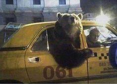 Having fun in Russia. Is Norilsk people like that?