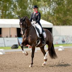 Charlotte Dujardin & Valegro at the Olympics! Charlotte Dujardin, Dressage Horses, Draft Horses, Equestrian Outfits, Equestrian Fashion, English Riding, White Horses, Horse Training, Horse Pictures