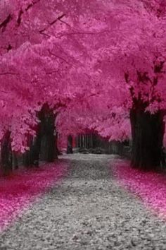 I love this pic. Trees pink. Looks like fall with lots of leaves on the ground.