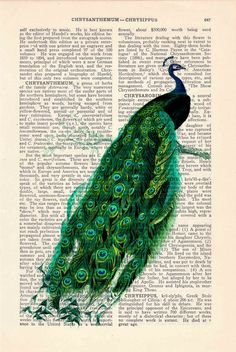 Peacock Feather Art Print on Vintage Book Page Home Office Nursery Decor Gifts