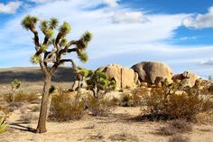 Kostenloses Bild auf Pixabay - Joshua Tree Nationalpark