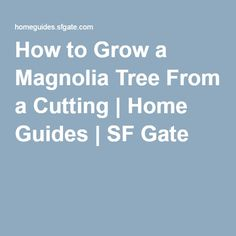 How to Grow a Magnolia Tree From a Cutting Pool Landscaping Plants, Magnolia Trees, Red Fruit, Good To Know, Gate, Gardening, How To Make, Outdoor Living, Garden Ideas
