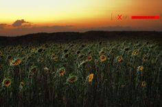 sleeping suns by George Xourafas on Sleeping Sun, Vineyard, Mountains, Nature, Travel, Outdoor, Deviantart, Facebook, Outdoors