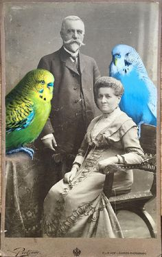 Painting colorful birds on old photographs | Ufunk.net