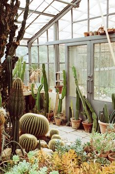All sizes | cactus greenhouse | Flickr - Photo Sharing!