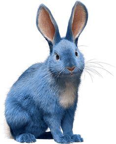Blue Bunny Ice Cream, Shiloh Shepherd, Fluffy Bunny, Old Cats, Lhasa Apso, Shih Tzus, Rainbow Bridge, Four Legged, Rottweiler