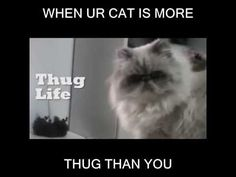 LMAO!!! WHEN YOUR CAT IS MORE THUG THAN YOU ARE: http://youtu.be/51Le0GiL2vU