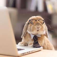 Impeccably-Dressed Bunny Models the Tiny Dapper Outfits Made by His Human - My Modern Met