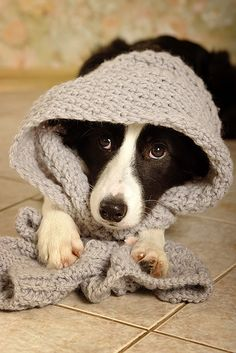 something about dogs with scarves about their heads...poor things.