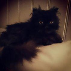 Katten min