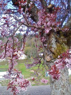 En Les Vosges abril2014