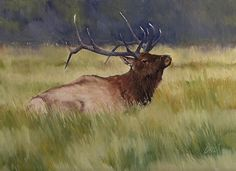 Yellowstone Elk by Joe Garcia Oil ~ 9 x 12