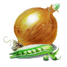 Onion and Peas Painting by Irina Sztukowski - Onion and Peas Fine Art Prints and Posters for Sale