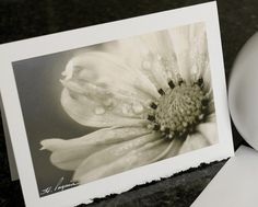 Any photo as a Greeting Card  Choose any by HPaquinPhotography, $4.00