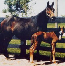 No Class(1974)(Filly)Nodouble- Classy Quillo By Outing Class. 5x5 To Hyperion. 29 Starts 3 Wins 5 Places 9 Thirds. $37,543. 2nd Yearling Sales S(Can-R), 3rd Princess Elizabeth S(Can-R). Dam Of Sky Classic(Multiple G1 SW), Grey Classic, Regal Clasic & Classy 'N Smart(Dam Of Dance Smartly & Smart Strike). Top Class Female Family.: