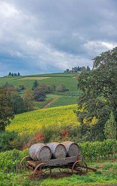 Les journées en  Beaujolais avec un tel  panorama sont toutes du même tonneau: splendides !