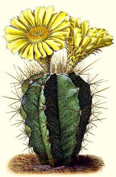 Cactus Decor, Cactus Art, Cactus Flower, Cactus Plants, Succulent Planters, Succulent Arrangements, Hanging Planters, Succulents Garden, Cactus Drawing
