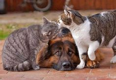 """The gray cat said to another cat """"hey what's up, you know this dog is MINE so don't even think about it yah?"""""""