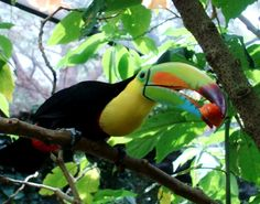 Boquete Photo Gallery: Paradise Gardens, Boquete, Panama