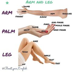 ❤️If you think it is useful! Thank you! ✅Arm and leg #arm #thumb #hand #fingers #elbow #arm #shoulder #palm #wrist #nail #pinky #ringfinger #middlefinger #indexfinger #nail #leg #thigh #hip #knee #ankle #foot #toe #boost_vocabulary #englishonline #englishclass #vocabulary #englishvocabulary