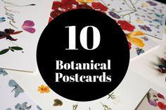 10 Botanical Postcards Set by Pikolab & Lokokon Botanical Art, Paper Goods, Dried Flowers, Postcards, Etsy Shop, Handmade Gifts, Hand Made, Flower Preservation, Dry Flowers