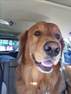 Backseat driver                                                                                                                                                                                 More