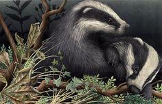 Badgers playing I Alan Baker Animal Magic, My Animal, Tattoo Project, Wildlife Art, Woodland Animals, Badger, Stone Painting, Art Sketches, Illustrators