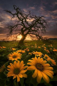Fields of Gold at Sunset ~ Rowena Crest, Oregon