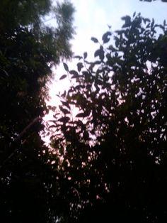 Es un atardecer entre los árboles