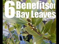 Burn Bay Leaves in the House and See What Would Happen in just 10 Minutes! - YouTube