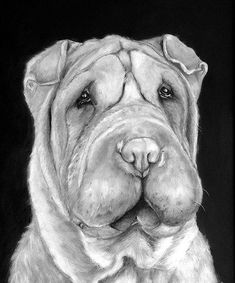 Items similar to Custom Chinese Sharpei Pet Portrait on Etsy Shar Pei Puppies, Bulldog Puppies, Dogs And Puppies, Doggies, Cachorros Shar Pei, Dog Paintings, Dog Portraits, Dog Art, Cute Animals