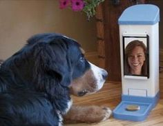 Teen's invention lets you remotely chat with your dog — and give it treats (Photo courtesy of GeekWire)