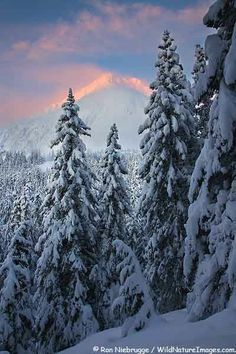 WINTER SUNRISE FORREST | Winter sunrise along the Lost Lake Trail, Chugach National Forest ...
