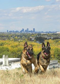 GSD ~ YES, THEY LEFT THE GATE OPEN, RUN, RUN FOR YOUR LIFE.  THEY'LL CATCH UP WITH US SOON ~