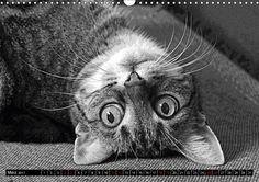 Katzen Pop Art in s/w - Kleine Tiger unter uns - CALVENDO Kalender von Marion Bönner