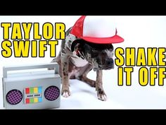 Taylor Swift - Shake It Off (Cute Dog Version) - YouTube Dogs can teach #TaylorSwift a thing or two about #ShakingItOff the right way! #TPC
